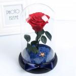 ETERNA 玻璃罩永生玫瑰花 | 小王子花